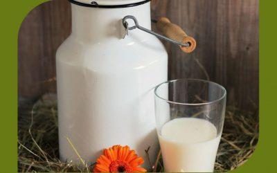 Is melk gezond?